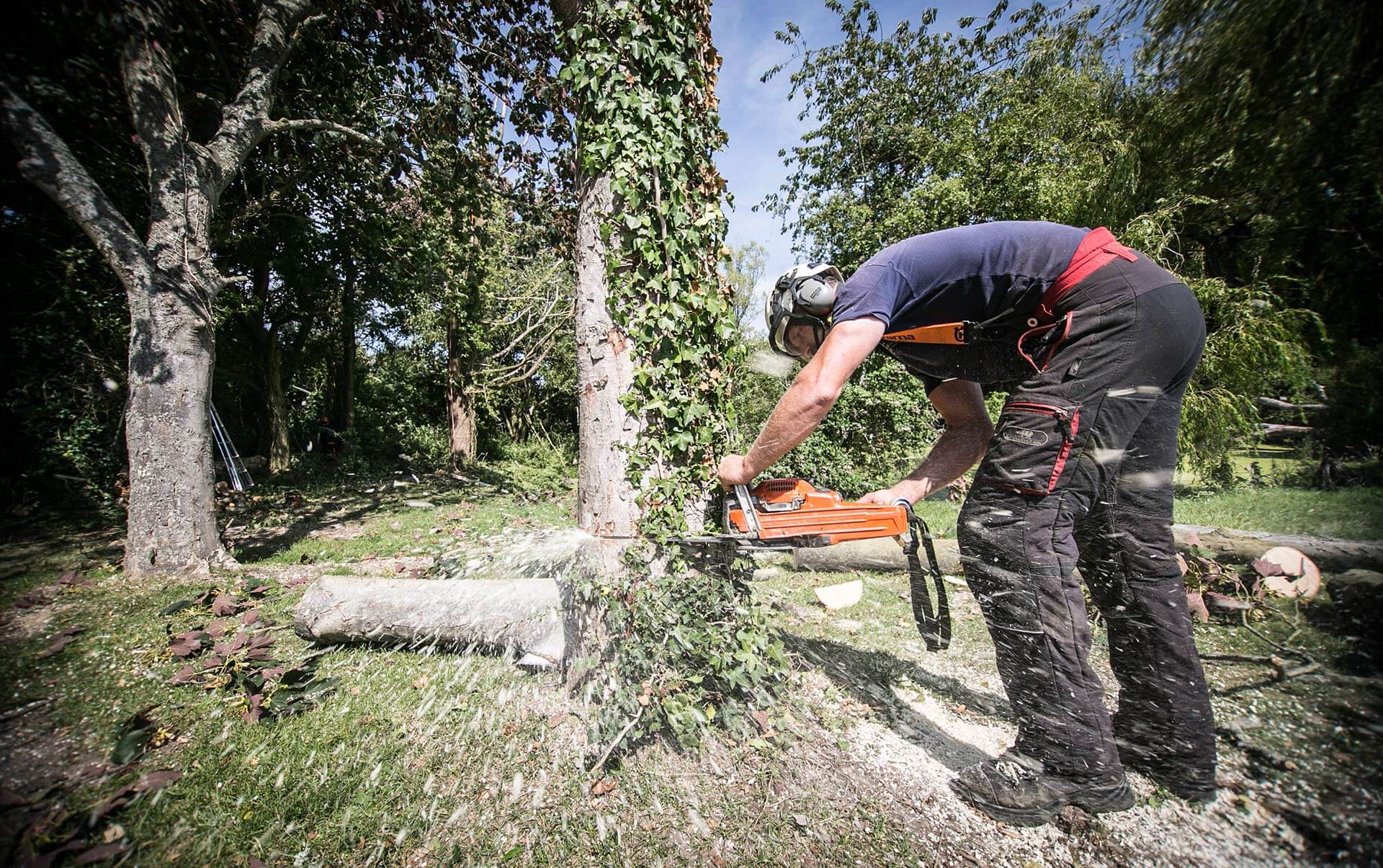 Stephen Bacon is a Qualified Tree surgeon working around chichester, Bracklesham, East, West Wittering, Sidlesham, Ham and West Sussex